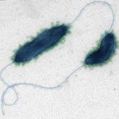Stock Microbe